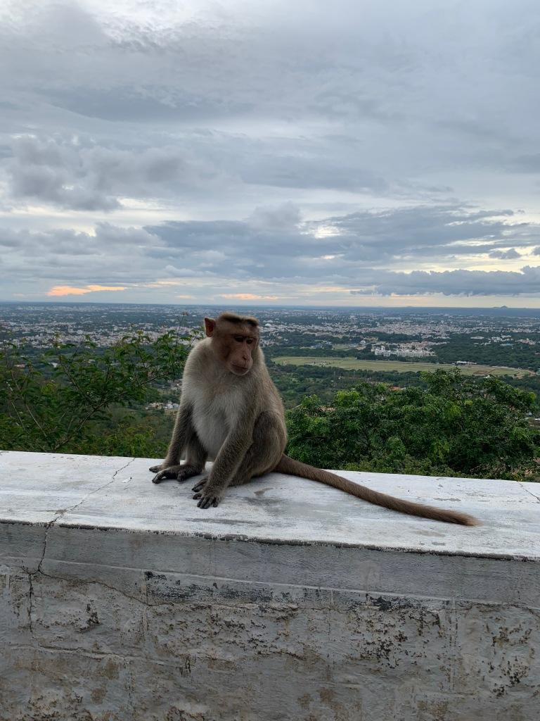Ancient Temples, Mischievous Monkeys – Tranquil & Tumultuous